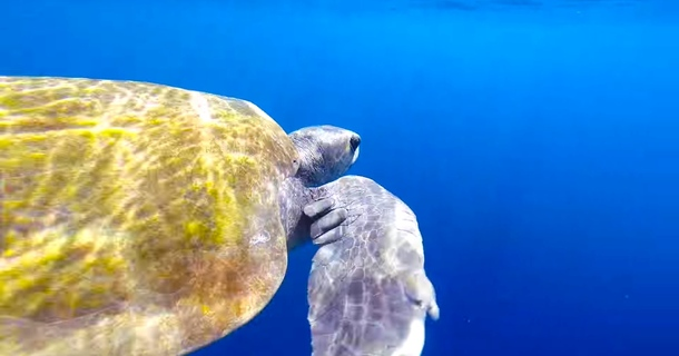 You'll Never Believe What This Sea Turtle Does Once He's Rescued